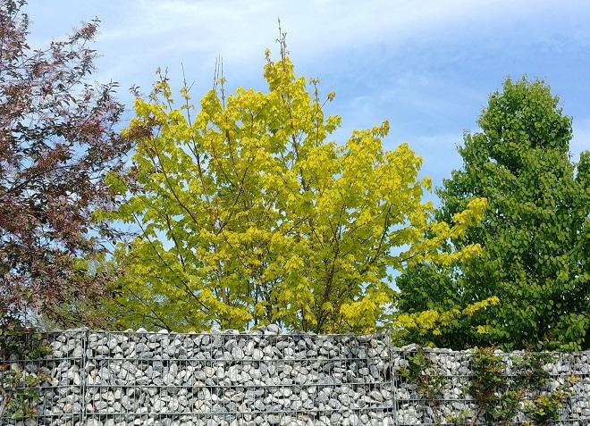 drei bäume, rot, hellgrün, dunkelgrün, steinmauer, gartenplanung, gartengestaltung, baum, hofbaum