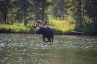 Ouzel Lake, Rocky Mountain National Park, August 2017
