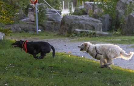 Dog Play - Ashbridges Bay