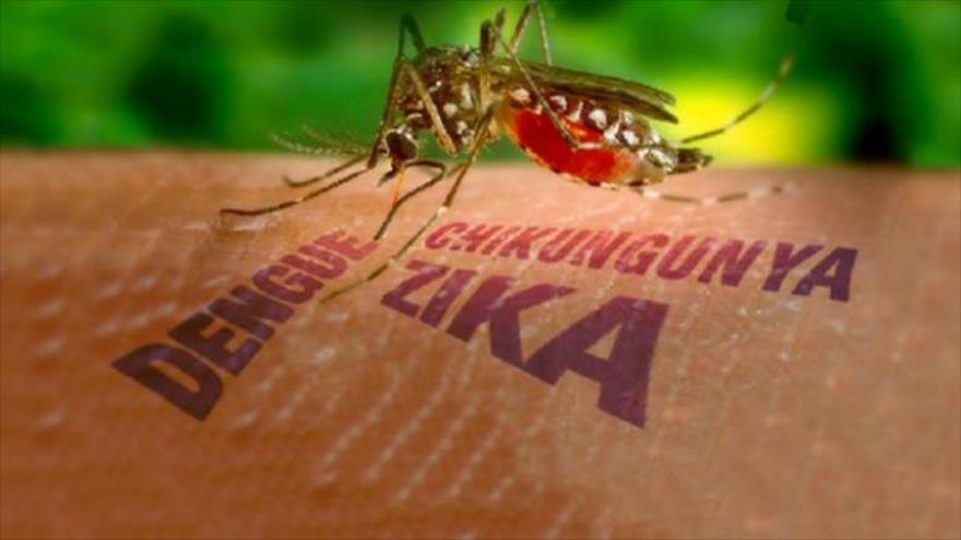 OMS investiga caso de transmissão do zika por contato sexual