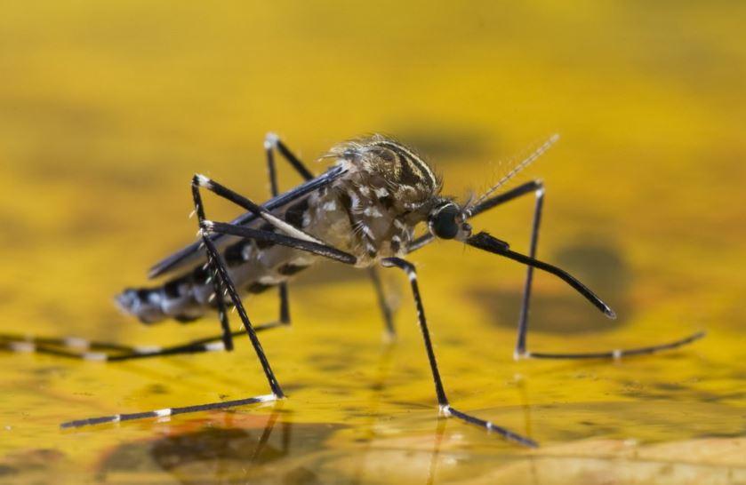 Número de casos confirmados de febre amarela passa de 400 no Brasil