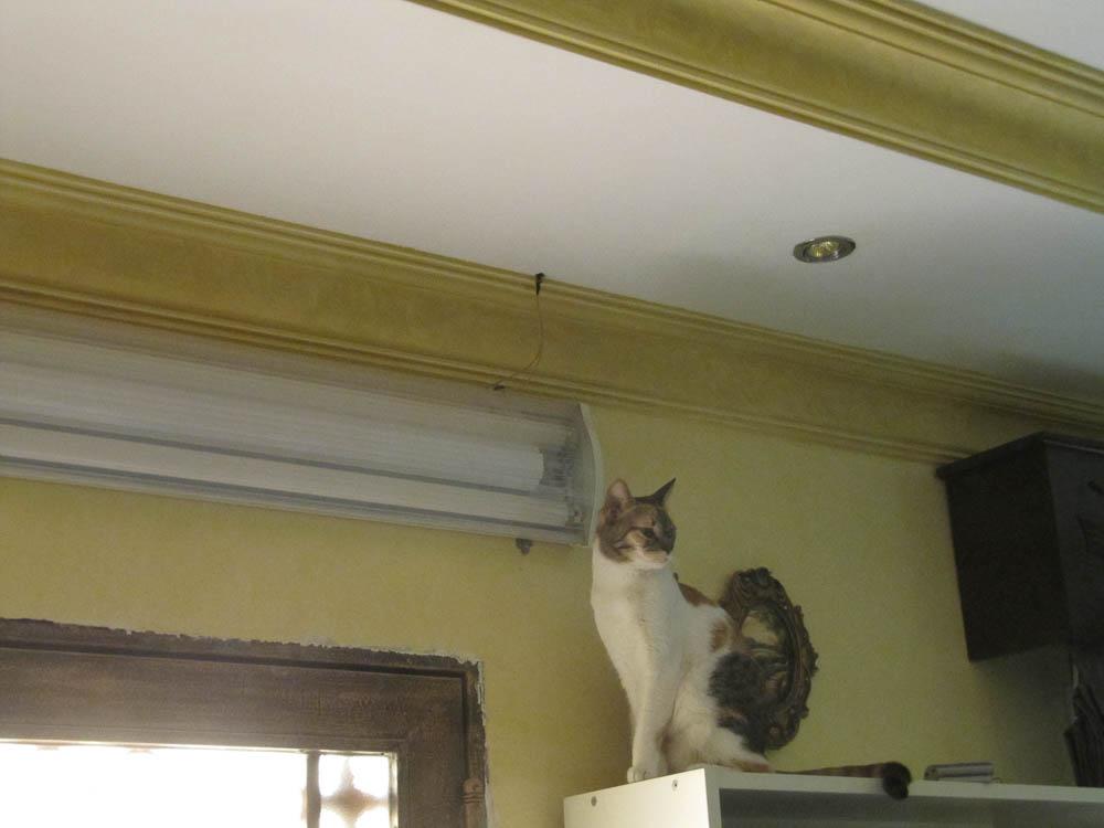 cat-up-to-mischief