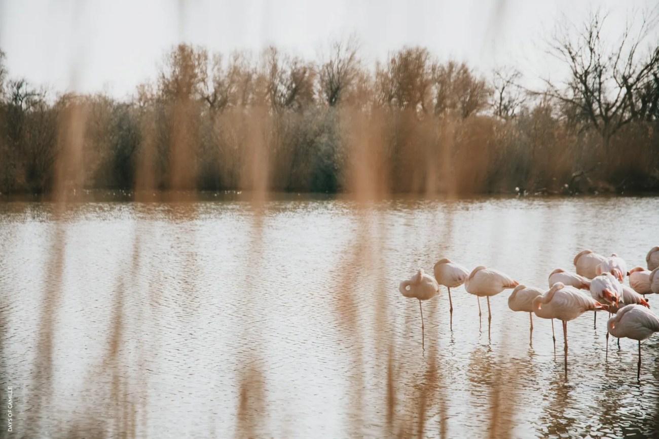 daysofcamille-parc-ornithologique-camargue-pontdegau20