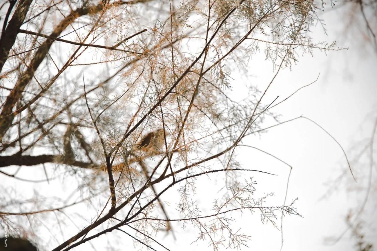 daysofcamille-parc-ornithologique-camargue-pontdegau42