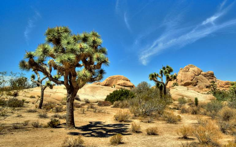 Joshua Tree National Park Day Trip Things To Do Attractions