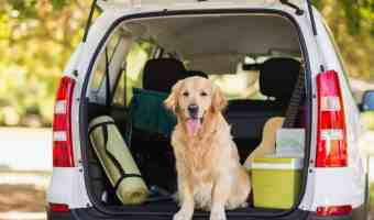 Is CBD for Dogs A Good Choice For Your Pet While Traveling?