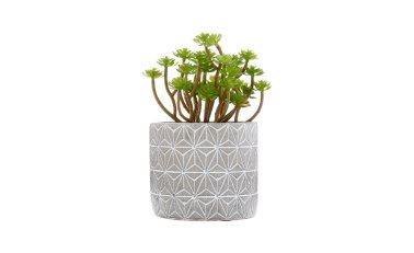 biljka u posudi, Emmezeta, 60 kn