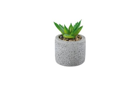 kaktus, Emmezeta, 19 kn