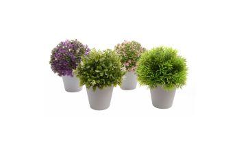 umjetna biljka, Emmezeta, 20 kn
