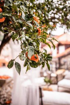 secret-orange-tree-dubrovnik (14)