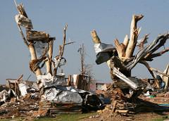 debris wrapped around tree from Tornado in Joplin MO