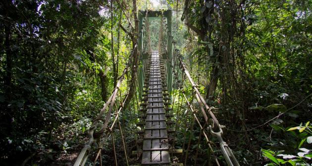 Tanjung Puting National Park Kalimantan