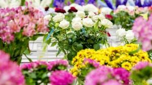 3Moederdag Planten Bazaar
