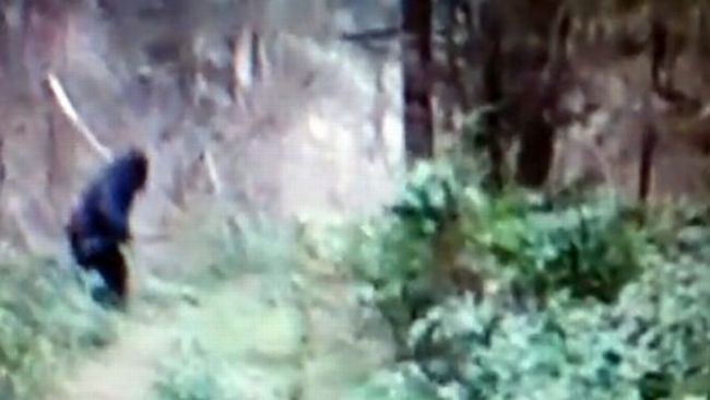 Man Dressed As Bigfoot killed, Creature Spotted In Ohino?
