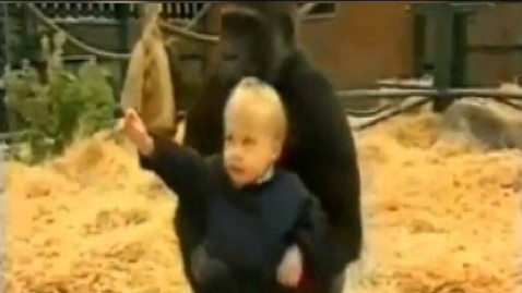 Gorilla Carries Toddler In Old Video