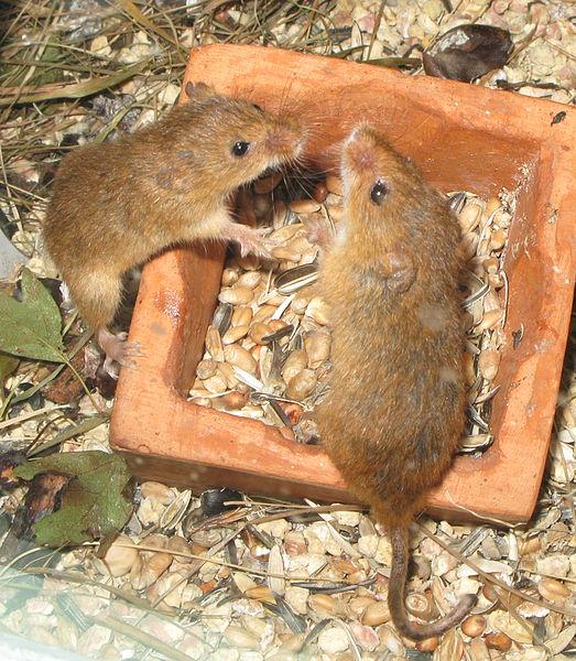 Galapagos Islands To Get Rat Extermination