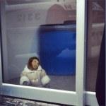 Ikea Monkey's Owner Will Seek Custody: Reports