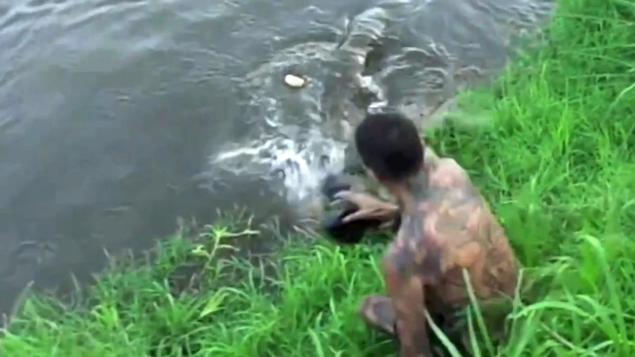 Crocodile In Costa Rica Nearly Eats Daring Photographer