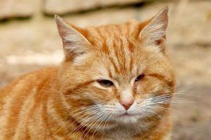 cat escapes vet