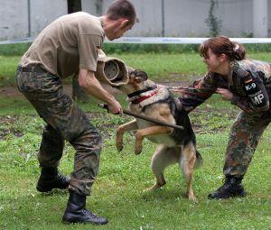Police dog eats suspect's hamster