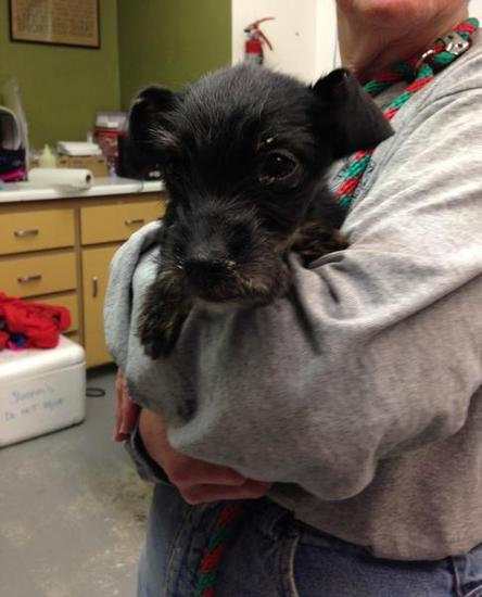 puppy locked in car for over 3 weeks survives