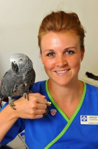 Pretty potty-mouth: The cursing African Grey parrot sits on the hand of vet Hayley Thompson after its rescue (Picture: Ross Parry)