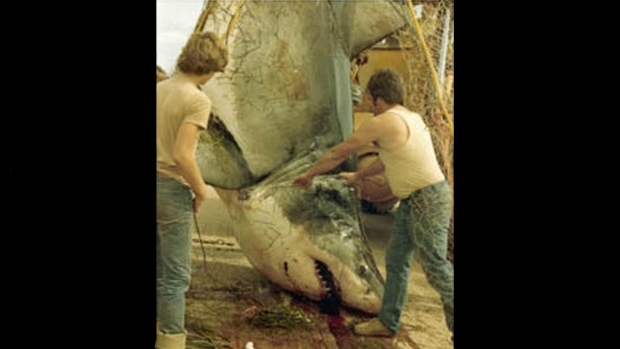 Legendary Shark Caught Off PEI in 1983 Had More Growing to Do: Report   Read Latest Breaking News from Newsmax.com http://www.newsmax.com/TheWire/legendary-shark-teenager-grow/2015/03/10/id/629335/#ixzz3U4xBQ6Ls  Urgent: Rate Obama on His Job Performance. Vote Here Now!