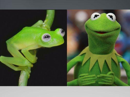 kermit-comparison