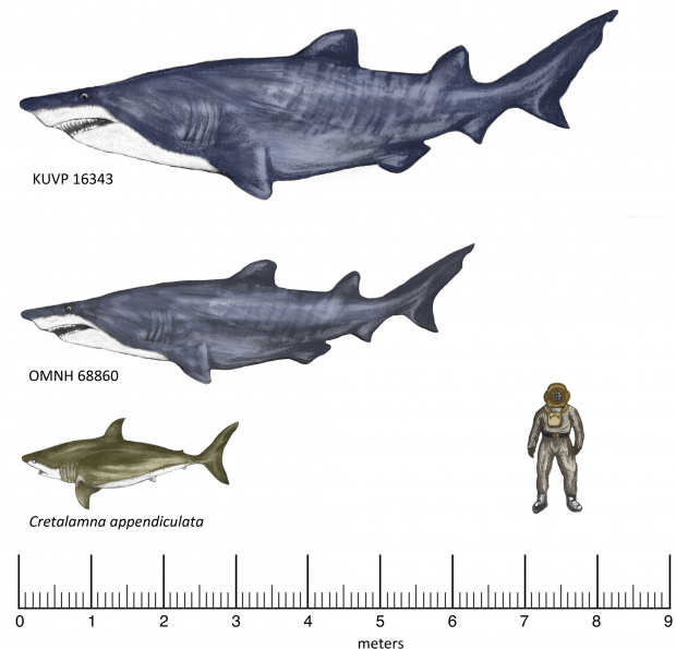 Gigantic Shark Fossil Found In Texas: Predator Was 20 Foot Long (PHOTO)