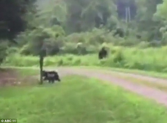 Bigfoot sighting North Carolina