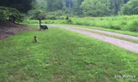 Bigfoot sighting In North Carolina:  Did Zippy The Dog Really Chase Bigfoot?