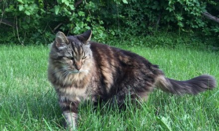 corduroy the cat named the world's oldest kitty