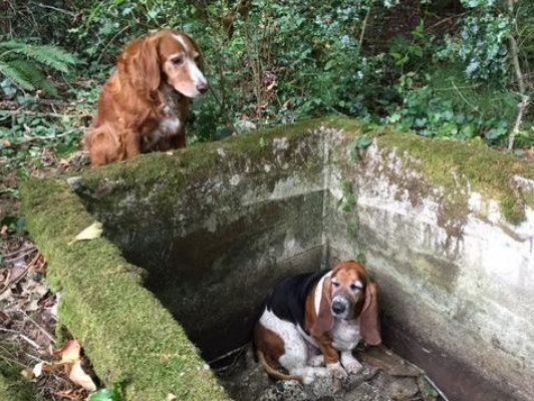trapped dog vashon island: Dog Waits With Trapped Friend For A Week