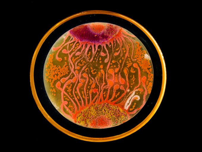 'Cell to Cell' by Mehmet Berkmen and Maria Penil from Massachusetts earned the People's Choice title. American Society of Microbiology