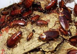 Hospital cockroach infestation Contained To Cafeteria at hospital in Santa Monica (VIDEO)
