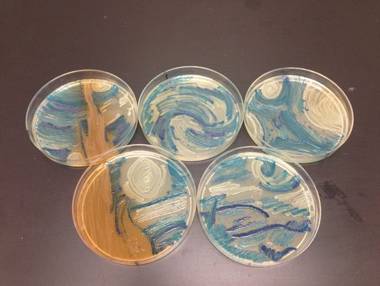 Starry Night In A petri dish:  Man Creates Art Replica In Petri Dish