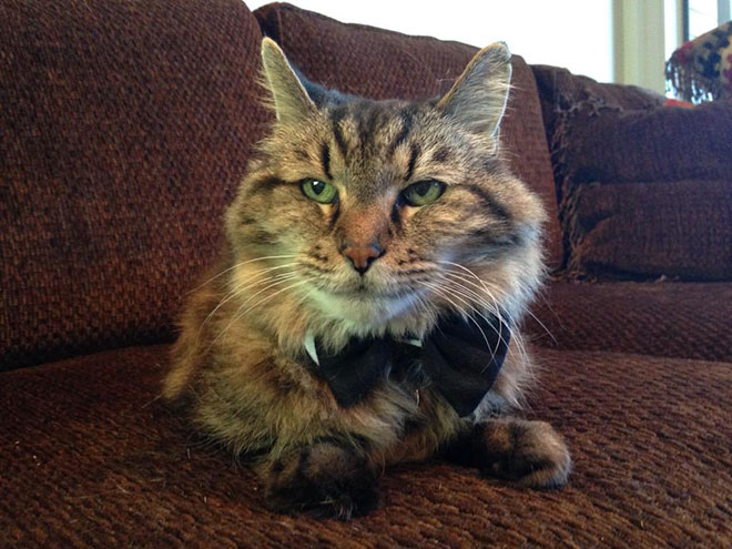 Corduroy Named World's Oldest Cat At 26 (PHOTO)