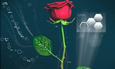 Cyborg rose:  Rose Has electric circuits running through it
