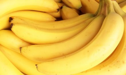 Are bananas going extinct?  Panama Disease Threatens Fruit: Study