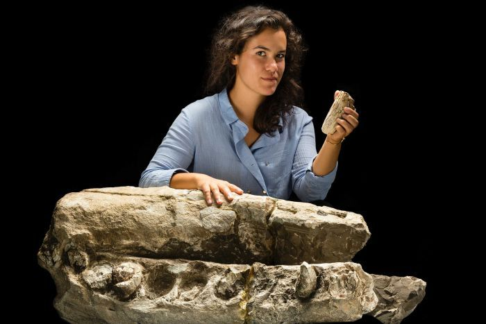 PHOTO: Researcher Alex Boersma with a fossil specimen of Albicetus mxymycterus, composed of the beak and lower jaws of the whale. She also holds a tooth from the specimen. (Supplied: Smithsonian Institute/James Di Loreto)