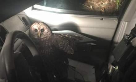 Owl attacks patrol car in Louisiana