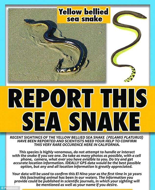 Rare sea serpent washes ashore