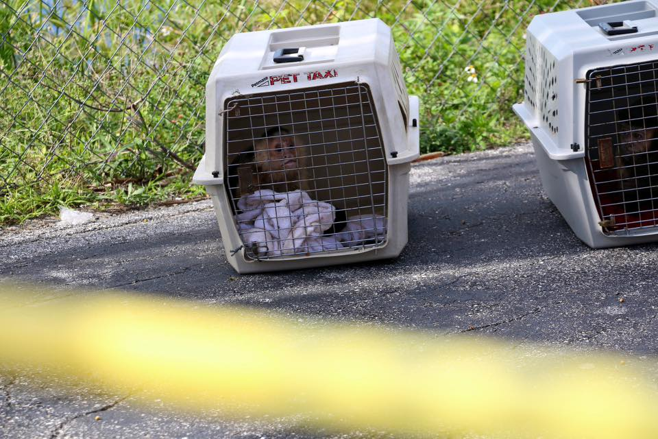 Investigation continues into suspicious death at Budget Inn. One death, one person being questioned. Two monkeys being removed from room by FWC. Monkeys were in cages in the room.