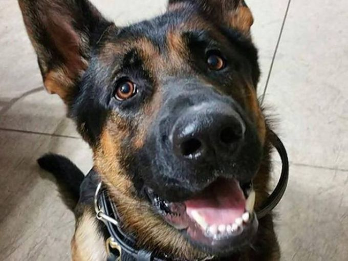Jethro police dog Ohio Shot In Shoot Out (PHOTO)