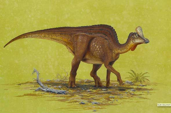 AN ILLUSTRATION OF A HOLLOW-CRESTED DUCK-BILLED DINOSAUR (VELAFRONS COAHUILENSIS) THAT MAY HAVE MADE NOISES WITH ITS HOLLOW CREST. CREDIT: © TODD MARSHALL, 2007