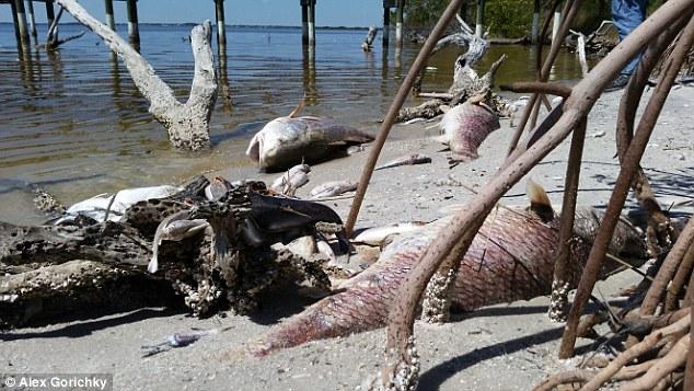 Florida fish kill