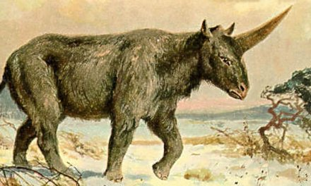 siberian unicorn discovery Details When 'Siberian hunicorn' last lived on Earth (PHOTO)