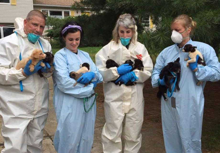 276 dogs Rescued In New Jersey House (PHOTO)