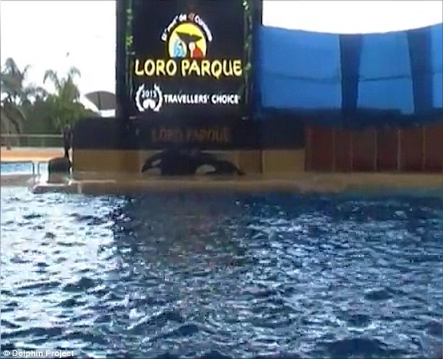 SeaWorld orca Morgan 1