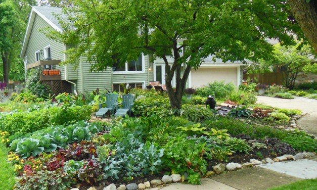 Town bans front-yard vegetable gardens, Couple sues